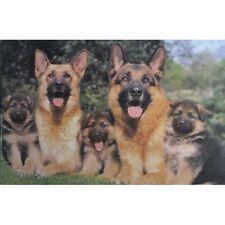 """GERMAN SHEPHERD DOGS & PUPPIES - ALSATIANS - 91 x 61 MM 36 x 24"""" ANIMAL POSTER"""
