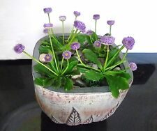 4 Purple Mini Flower Artificial Succulents Grass Lifelike Plants