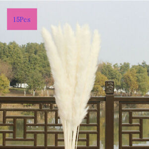 15Pcs Large Natural Dried Pampas Grass Reed Flower Bunch Wedding Bouquet Decors