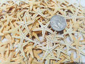 50x Real Starfish - Natural shells  for Wedding  invitation &craft  3-4cm