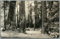 RPPC Postcard Muir Woods National Monument CA Cathedral Grove Forest Trees Zan