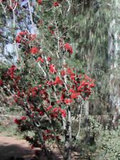 Summer Semi-evergreen H3 (-5 to 1 ° C) Hardiness Plants, Seeds & Bulbs