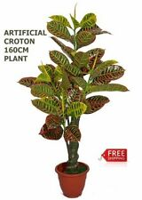 Unbranded Tree Fern Flowers & Floral Décor