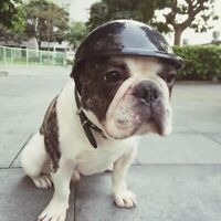 Pet Dog Ridding Helmet Puppy Bike Motorcycle Hike Hat Plastic Head Protector Cap