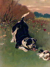 STAFFORDSHIRE BULL TERRIER CHARMING DOG GREETINGS NOTE CARD DOG PLAYS WITH CAT
