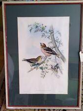 1870 Original John Gould Lithograph Coccothraustes Vulgares VERY RARE