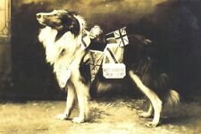 Collie Dog Collecting $ WW-I 1915 Antique Photo - 8 LARGE New Blank Note Cards