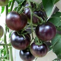 BLACK TOMATO COLLECTION 3 SUPERB DIFFERENT BLACK VARIETIES IN ONE DEAL 30 SEEDS