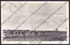 MONDINE 236 MONDARISO RISO RISAIA LAVORI AGRICOLI Cartolina viaggiata 1953