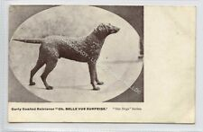 "(Ld7227-471) Dog, Curly Coated Retriever, Champion ""Belle Vue Surprise "" Unused"