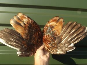 ROOSTER CHICKEN FEATHERS BIRD TAXIDERMY