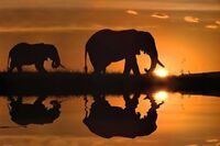 African Silhouette Elephants Photo Art Print Poster 36x24 inch