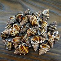 7pcs Natural Beautiful Sea Shell Conch Gyrineum Gyrinum Aquarium Decor #