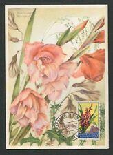 San marino Mk 1957 flora gladiole maximum tarjeta Carte maximum card mc cm d8086