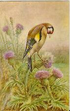 BIRD : Goldfinch- GEORGE RANKIN-SALMON