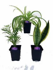Houseplant Collection Parlor Palm Spider Plant Snake Plant Best Gift Live Plants