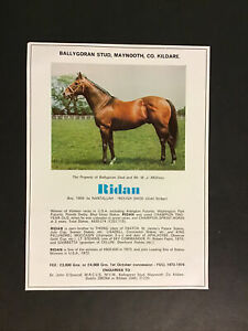 RIDAN Horse Racing 1962 FLORIDA DERBY