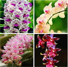 100pcs 25 colors Mix Rare Cymbidium orchid seeds, plant for home garden