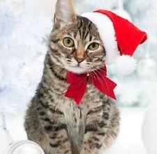 "Christmas Card - ""Santa Paws""  Beautiful Tabby Cat & Fast FREEPOST 1st Class"