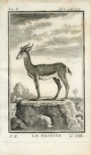 1769 GAZELLE Antique Copper Plate Engraving Print BUFFON