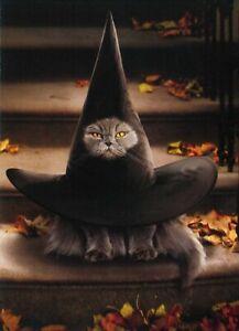 Avanti funny greeting card Halloween kitten witch
