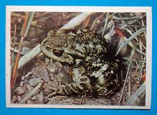 Figurina Panini-ANIMALI DI TUTTO IL MONDO 1965-n.31-ROSPO-rec