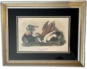 Lithograph Drawn From Nature by JJ Audubon Eider Duck JT Bowen PL405 Mat/Framed
