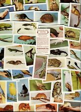 "HORNIMAN TEA 1960 SET OF 48 ""PETS"" BIRDS TEA CARDS"