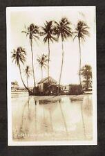 Vintage Postcard ~ Real Photo Palms & Rice Fields, Hawaii ~ Unused