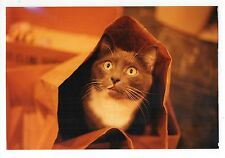 Vintage 4x6 Photo Cat In Shopping Bag, Found Art, Apl16