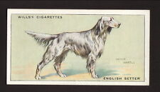 English Setter--1937 Will's British Cigarette Card