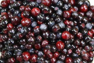 100 GARDEN HUCKLEBERRY Ground Cherry Solanum Melanocerasum Berry Fruit Bush Seed