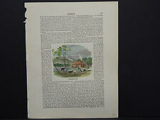 All Around The World, Hand Color c.1890 A Sheperd's Hut: Australia #14
