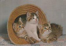 "*Postcard-""The 3 Kittens Staring"" /Postmarked 1978/  (U2-174)"