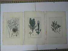 BUCHOZ Le grand jardin de  l'univers 1785-1791 49 x 30 cm 3 planches 14+20+25