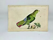 Purple-Tailed Parrakeet - 1783 RARE SHAW & NODDER Hand Colored Copper Engraving