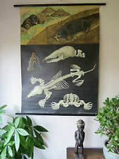 Vintage Jung-Koch-quentell desplegable tabla de tiza Escolar/cartel de un topo
