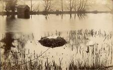More details for kidderminster photo. swans & nest by s.goodwin, kidderminster.