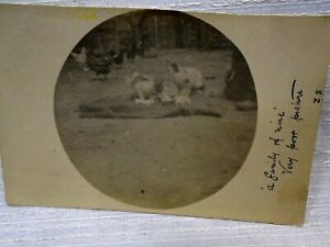 Lovely Farm Yard Real Photo Postcard Chickens and Cats Kittens