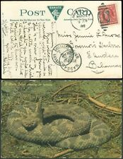 1910 Miami fL Cds, RATTLESNAKE on Picture Post Card to GOVERNOR'S HARBOR BAHAMAS