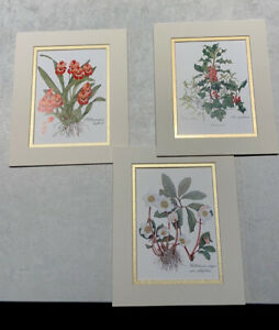 """Botanical Matted Prints (3) 8"""" X 10"""". Ready For Framing"""