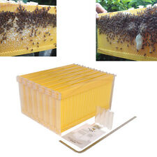 6PCS Bee Auto Move Down Raw Honey Beekeeping Beehive Hive Frames Harvesting NEW