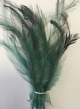 Dyed Emu Feathers - Sea Green - bunch of 25