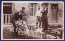 funny rppc snapshot photo 5 dogs farm scenery foto chien hound dog Hund ca 1910