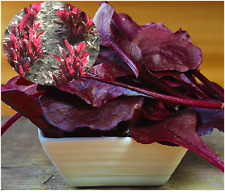 Beet (root) Greens Red Purple Salad Leaf Seeds SOW NOW !  Spanish Remolacha