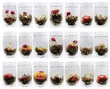 10 Stk. Teerose Erblühtee Teeblume Tee-Pfingstrose Flowering tea Blooming tea