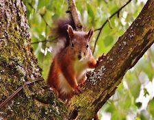 METAL REFRIGERATOR MAGNET Squirrel In Tree Looking At Camera Squirrels