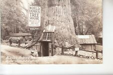 Real Photo Postcard Famous Tree House at Lilley Redwood Park on Redwood Hwy CA
