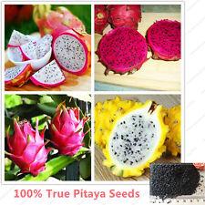100pcs Sweet DRAGON FRUIT MIX Pitaya Bonsai Tree Plants seed for house garden