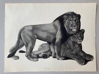 Georges Lucien GUYOT LITHOGRAPHIE Lion Lionne Tigre Panthère Esprit Paul Jouve